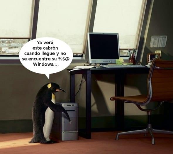 pinguinos2