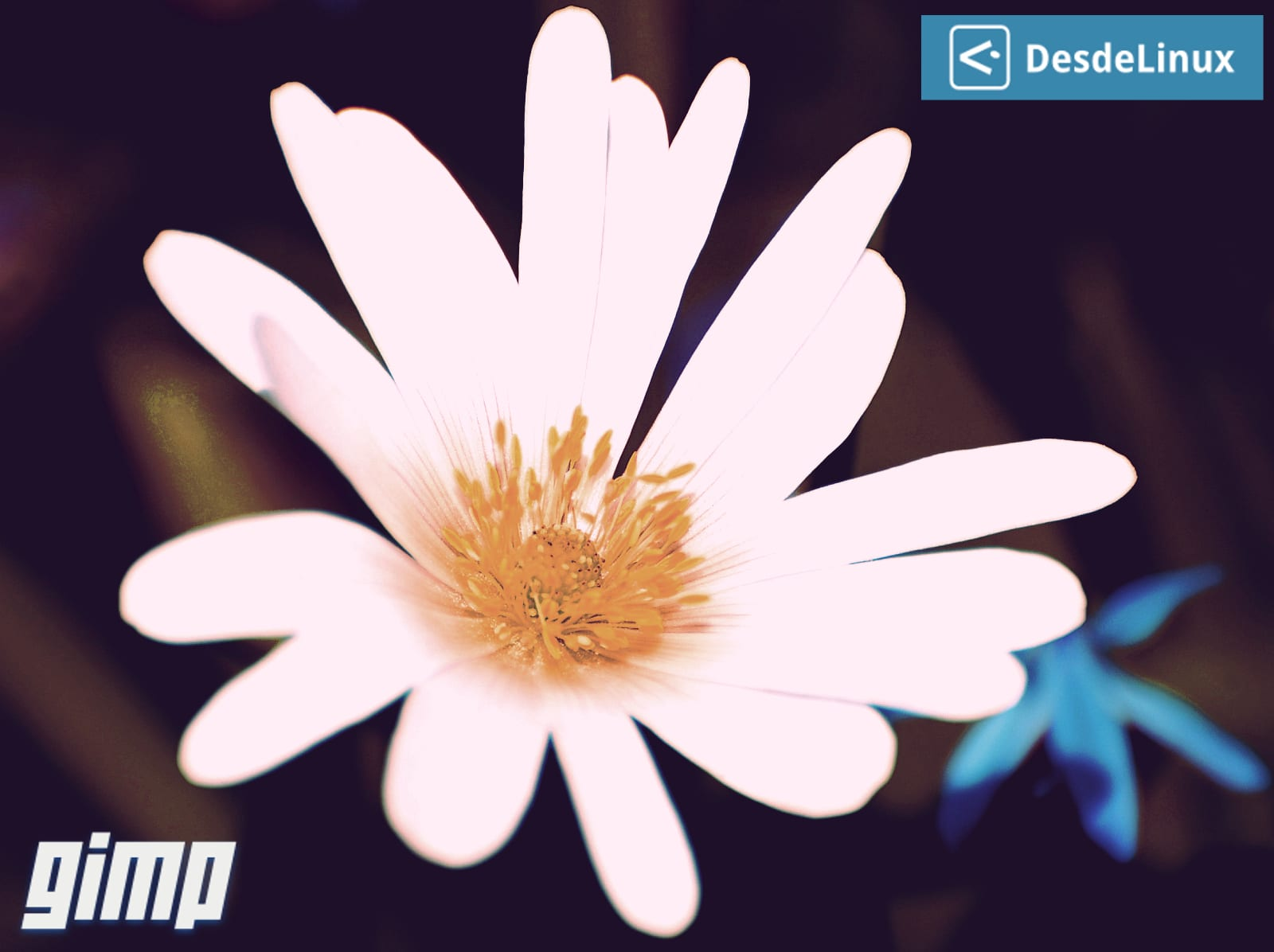 White_Flower_Closeup